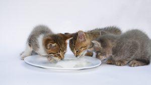Oh my gosh!!! Kittens!